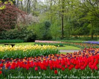 keukenhof tulip garden netherlands,colorful flowers images,red yellow tulips flowers,garden design ideas,best parks in europe,