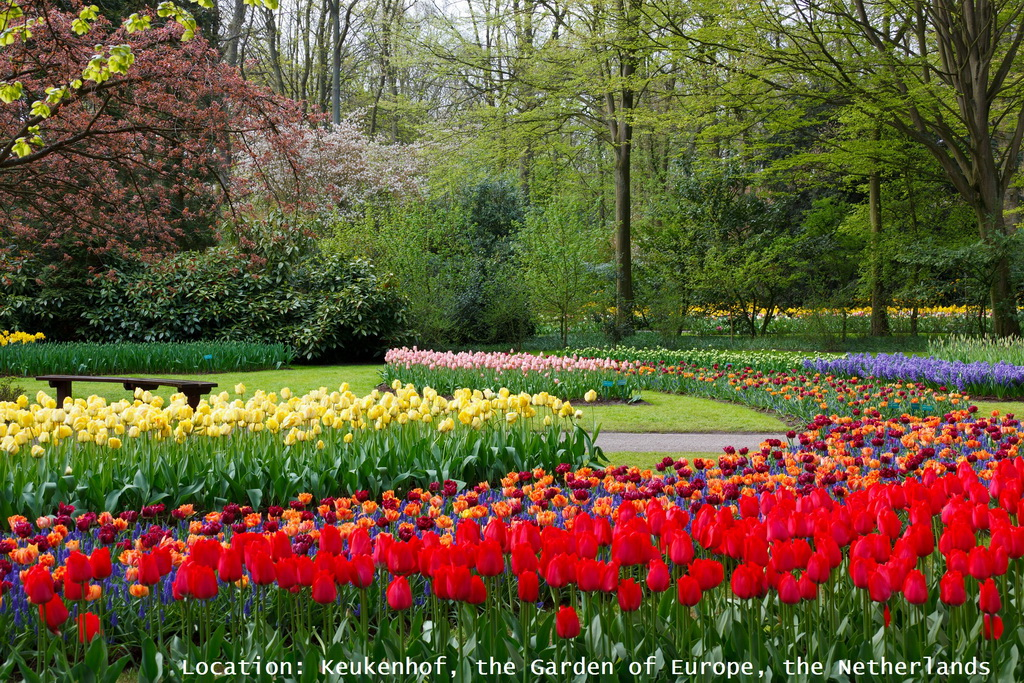 Keukenhof Garden of Europe,Netherlands,flowers,blooming flowers,garden,garden flowers,Nature,sky,garden art,landscape,flowers in design,red,red color,yellow color,blue color,green color,red flowers,yellow flowers,blue flowers,color,colourful,vibrant colors,primary colors,spring flowers,beautiful garden,love flowers,beautiful flowers,language of flowers,exterior design,landscape design ideas,garden architecture,beautiful garden ideas,beautiful garden design,exterior design ideas,outdoor,garden design,design,outdoor oasis,garden plants,beauty garden,garden ideas,outdoor design ideas,garden design ideas,