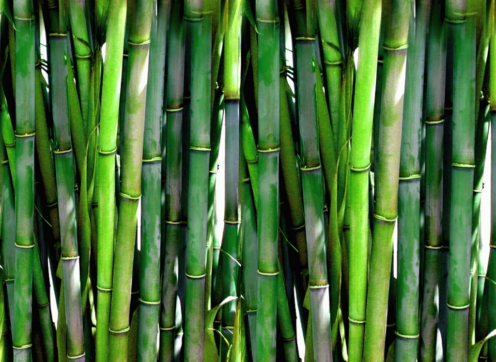The Symbolism Of The Bamboo Archi Living Com