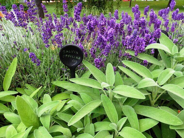 healing herbs for your garden,floraart bundek,sage herb garden,lavender herb garden,mediterranean herb garden design,