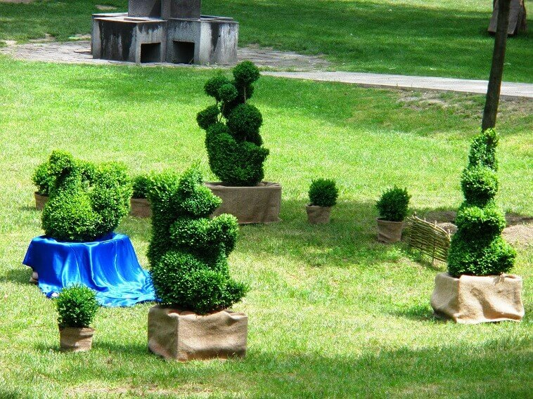 bushes shaped like animals,topiary art works,animal sculptures for the garden,topiary drvo,shaped bushes garden,