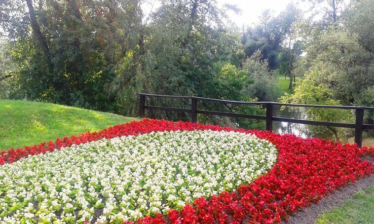 planted flowers white red,red and white flowers images,garden shows images,flowers by the lake,flower art bundek,