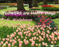 Nature,spring,spring garden,spring landscape,flower garden,sky,flowers,love flowers,beautiful flowers,blooming flowers,garden flowers,Nature quotes,spring quotes,spring sayings,spring love quotes,quotes about spring,spring day quotes,flower quotes,flower love quotes,flower sayings,floral quotes,quotes about flowers,seasons quotes,quotes,inspirational quotes,motivational quotes,love quotes,positive quotes,quote of the day,life quotes,best quotes,famous quotes,photo quotes,beautiful quotes,