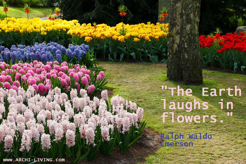 D_Earth_colorful_flowers_spring_quote_Ralph-Waldo-Emerson_Archi-living_resize.jpg