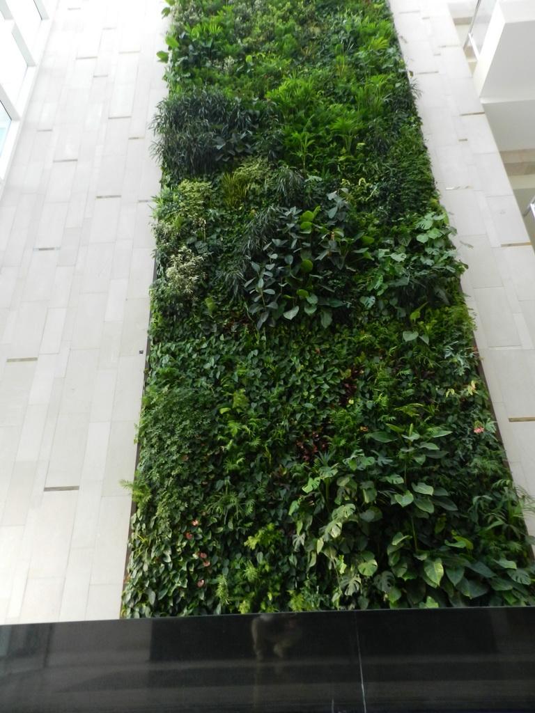 tallest indoor vertical garden in uae,beautiful vertical garden ideas,bring greenery in building ideas,sundar italia gardens,vertical garden indoor plants,