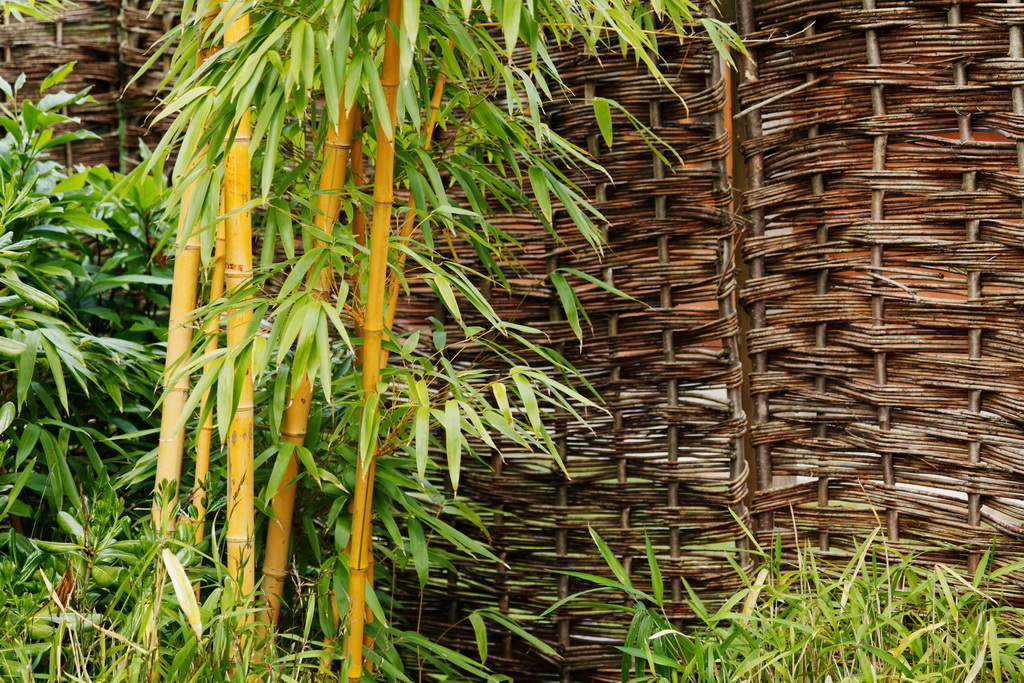 D_bamboo_plant_in_garden_design_decor_nature_Archi-living_resize.jpg