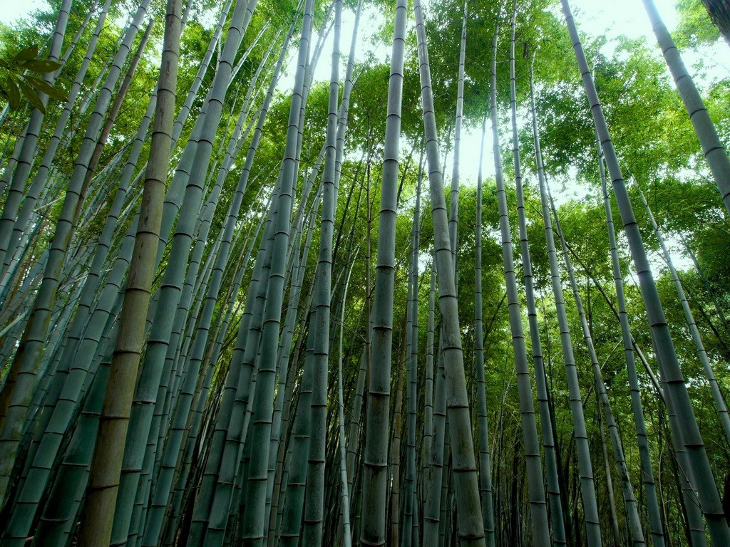 The symbolism of the bamboo archi living link to the article the symbolism of the bamboo buycottarizona Image collections