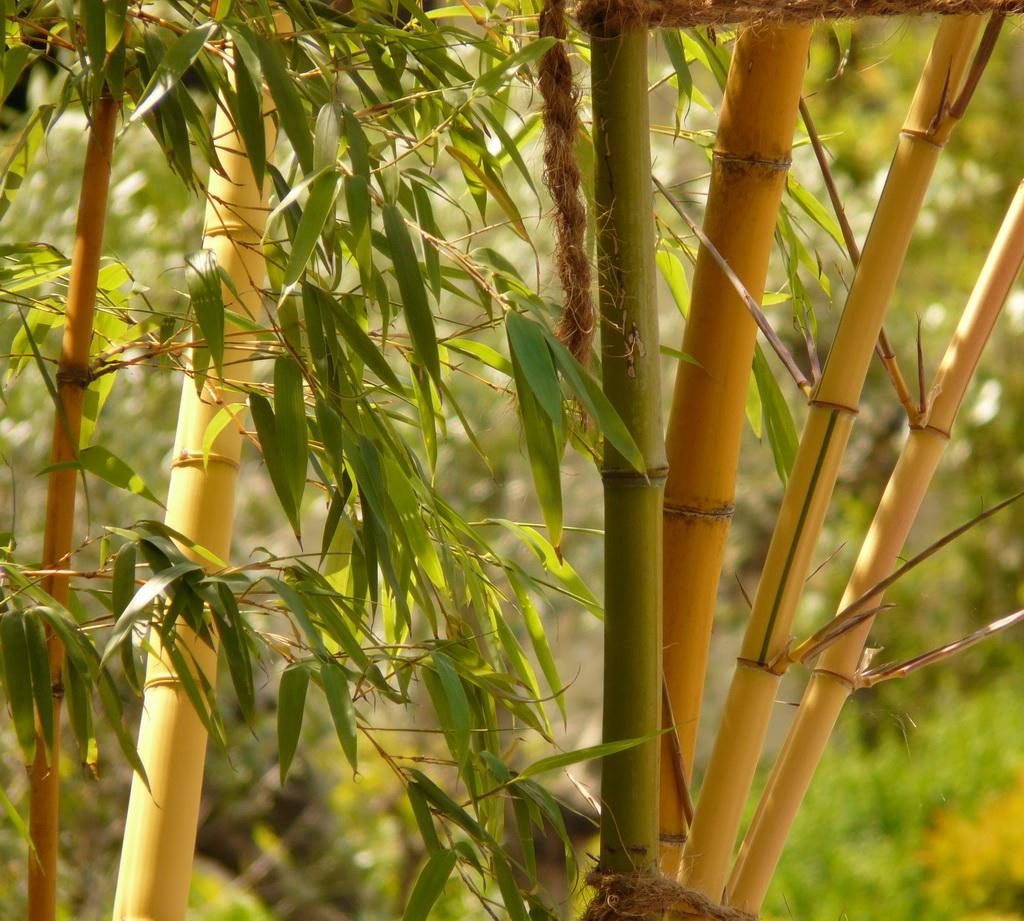 The Symbolism Of The Bamboo Archi Living Com