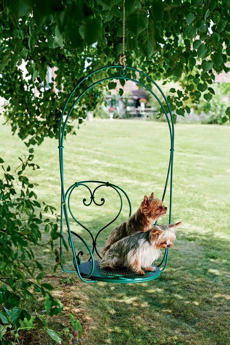 green chair with heart shaped back,two yorkies in garden chair,your favorite color and what it says about you,favorite color green personality,green color psychological effects,