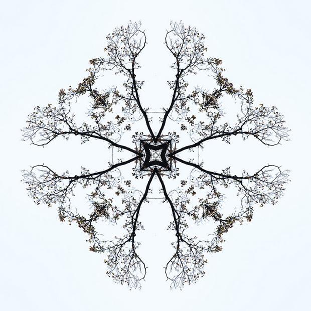 Flora-4_resize.jpg