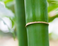 bamboo symbolism longevity,bamboo stem meaning,plant that symbolizes strength,plant meaning good health,spiritually important plants meaning,