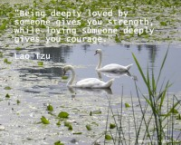 lao tzu quotes on love,two swan images,romantic love quotes for her in english,inspirational quotes about love,being loved and loving someone quote,