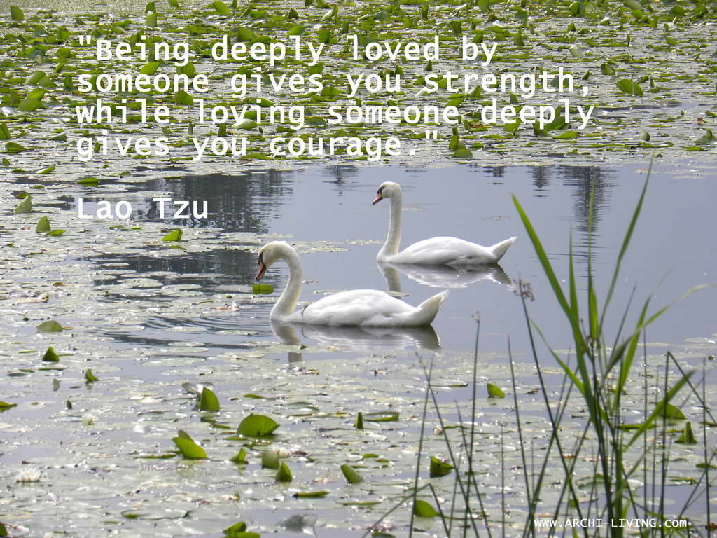 quotes,Lao Tzu quotes,inspirational quotes,inspirational love quotes,motivational quotes,motivational love quotes,love quotes,beautiful love quotes,famous love quotes,positive quotes,quote of the day,life quotes,best quotes,famous quotes,photo quotes,beautiful quotes,swans,two swans,couple of swans,romantic swans,swan lake,romance,romantic,
