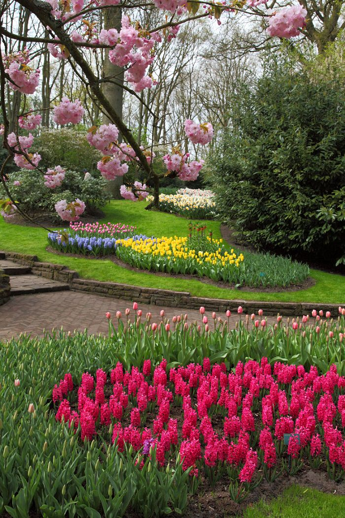 Keukenhof Gardens,the Garden of Europe,Netherlands,garden,garden design ideas,famous gardens,outdoor,garden design,design,flowers,blooming flowers,garden flowers,garden art,flowers in design,landscape design,landscape,beautiful garden,exterior design,porch design,small garden design,landscape design ideas,garden architecture,beautiful garden ideas,beautiful garden design,exterior design ideas,