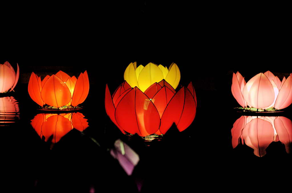 L_lotus-lantern_light_FreeImages.com_photo-Robin-Liang_Archi-living_resize.jpg