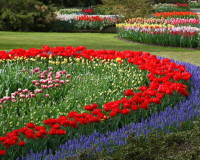 red and blue flowers images,beautiful flowers in the world,park design ideas,landscape design ideas,colorful flowers for the garden,