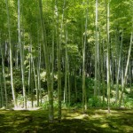 The Symbolism of the Bamboo