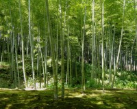 bamboo forest vegetation,bamboo symbolism india,meaning of bamboo in chinese culture,natural garden design ideas,natural materials in architecture,