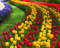 red yellow flowers images,beautiful gardens in the world,colorful floral design,