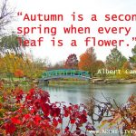 Picturesque and Colourful Autumn Quotes
