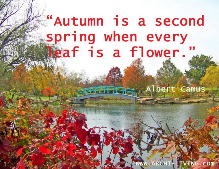 Nature quotes,Albert Camus quotes,autumn inspiration,monet bridge,japanese bridge,autumn inspiration quotes,autumn sayings,autumn quotes,japanese garden,japanese garden art,japanese garden design,japanese landscape,seasons quotes,quotes,inspirational quotes,inspirational autumn quotes,motivational quotes,positive quotes,quote of the day,best quotes,famous quotes,photo quotes,beautiful quotes,autumn,autumn landscape,autumn scenery,autumn garden,autumn woods,autumn leaves,autumn leaves colors,red autumn leaves,green autumn leaves,autumn trees,