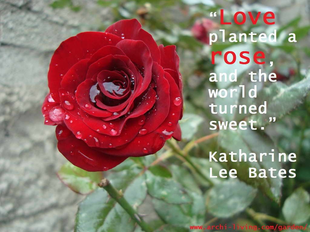 quotes,Katharine Lee Bates quotes,inspirational quotes,motivational quotes,love quotes,positive quotes,quote of the day,life quotes,best quotes,famous quotes,photo quotes,beautiful quotes,red rose,rose,rose symbolism,red rose symbolism,rose garden,rose garden ideas,rose wedding,romantic flowers,romantic rose,rose meaning,red rose meaning,love flowers,beautiful flowers,language of flowers,beautiful garden ideas,beautiful garden design,exterior design ideas,valentines day,romantic,color of love,red,red color,colourful,vibrant colors,color,primary colors,