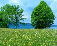 colorful spring meadow,yellow flowers on the green grass,spring scenery images,spring season scenery images,beautiful flowers in the world,