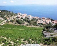 sveta nedjelja hvar,view of the vineyards,hvar dalmatia croatia,adriatic islands croatia,dalmatian vineyards,