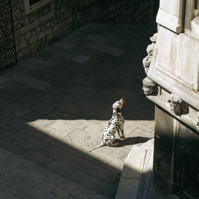The Cathedral of St. James in Sibenik,Croatia,Dalmatian dog,unesco world heritage site,unesco Croatia,