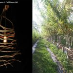 Natural Furnishing, Wild style home, Raw style, TrendLab, Natural Elements