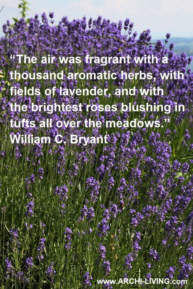 Fragrant Lavender Quotes And Sayings Archi Living Com