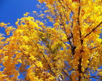 Autumn Landscape, Trees, Garden Design, Nature, Blue Sky