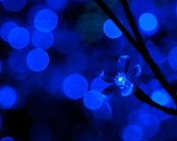 Blue Light, Blue Décor, Design Inspiration, Interior Décor, Art Ideas