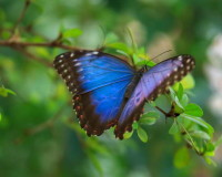 Blue Butterfly, Nature, Garden, Landscape