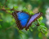 Blue Butterfly, Nature, Garden, Landscape