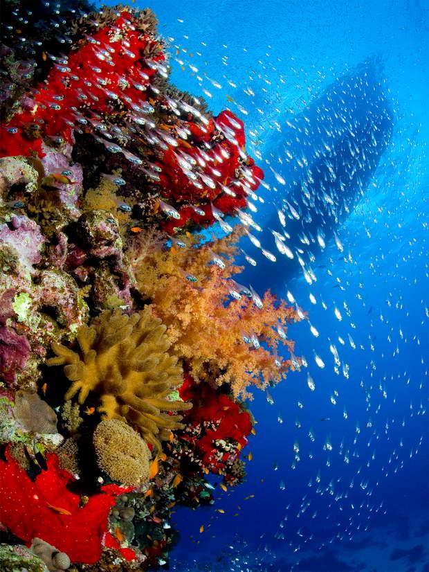 diving_de_erg_monika_resize.jpg