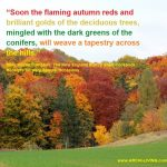 Photo Quotes – the Color Palette of Autumn
