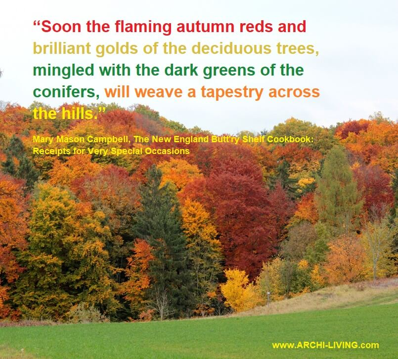 mary mason campbell quotes,photo quotes about colors of autumn,inspirational quotes on colours,forest in autumn images,colorful autumn trees,