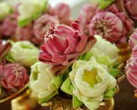lotus flower photo,pink lotus photo,white lotus images,garden flowers,flower images,