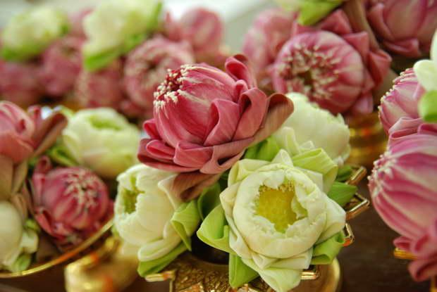 lotus,lotus flower,lotus root,blossoming lotus,lotus meaning,lotus symbol,lotus garden,pink lotus,pink lotus symbolism,pink lotus meaning,indian lotus,lotus pond,lotus india,lotus thailand,lotus cambodia,lotus vietnam,lotus chinese,lotus asia,asia lotus,white lotus,white lotus symbol,white lotus meaning,pink color,sunrise,sunset,flowers,blooming flowers,garden,garden flowers,Nature,sky,garden art,landscape,flowers in design,flower symbol,flower meanings,spring flowers,beautiful garden,love flowers,beautiful flowers,language of flowers,exterior design,