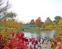 autumn,autumn landscape,autumn scenery,autumn garden,monet bridge,japanese bridge,autumn leaves,autumn leaves colors,red autumn leaves,green autumn leaves,yellow autumn leaves,japanese garden design,autumn trees,autumn inspiration,