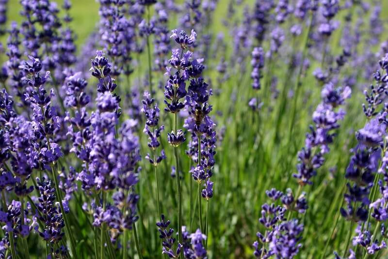 how to design a relaxing space,lavender and green color scheme,lavender color combinations,lavender color goes well with,interior design for positive thoughts,
