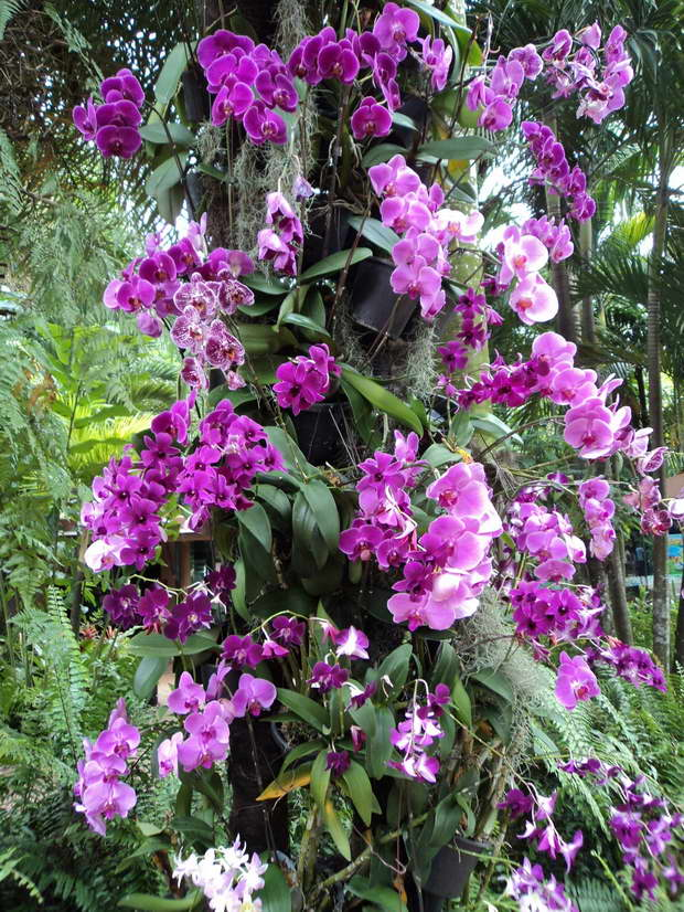 violet orchids flower,purple flowers images,how many orchids are there,orchids in nature,orchids growing on trees,