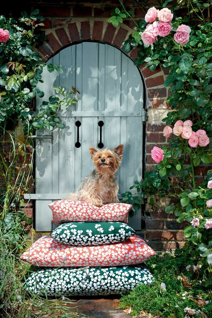 colorful terrace decorations,cute yorkie in the garden,colorful decorative cushions for garden,decorating with fabric ideas,how to decorate a terrace beautifully,