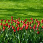 Red Color in Home and Garden Design