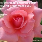 The Beauty of Roses – Colorful Photo Quotes