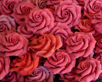 romantic rose design,soap ideas,