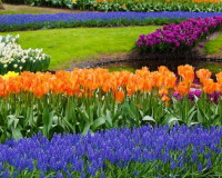 colorful flowers in parks,blue purple and orange flowers,garden design ideas,parks in the world,landscape design,