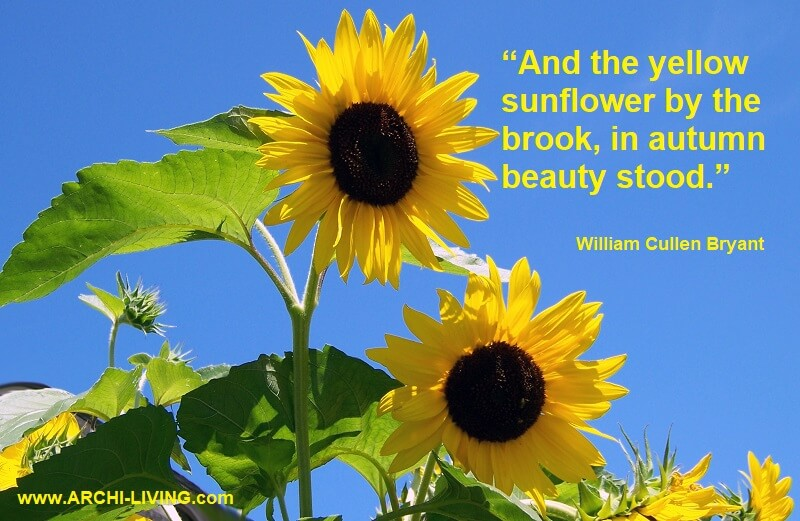 photo quotes about colors of autumn,inspirational quotes on colours,william cullen bryant quotes,yellow sunflowers photography,colorful quotes and sayings,