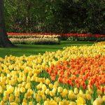 Yellow Color Optimism in Design